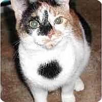 Adopt A Pet :: Jiffie - Clementon, NJ