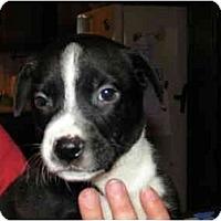 Adopt A Pet :: Sammy - Rigaud, QC
