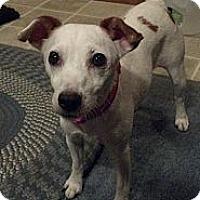 Adopt A Pet :: Sookie in Houston - Houston, TX
