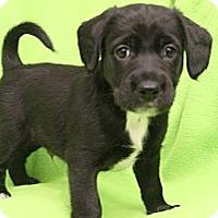 Adopt A Pet :: Paul Mitchell - Wytheville, VA