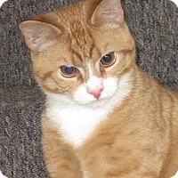 Adopt A Pet :: Clover - N. Billerica, MA