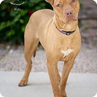 Adopt A Pet :: NALA - Chandler, AZ