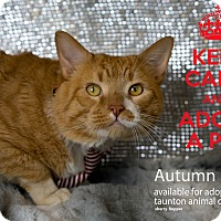 Adopt A Pet :: Peanut - Brockton, MA