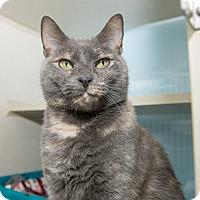 Adopt A Pet :: Sofia - New York, NY