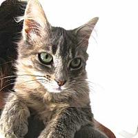 Adopt A Pet :: Nike - Davis, CA