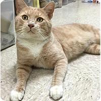 Adopt A Pet :: Luke - Milford, MA