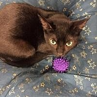 Adopt A Pet :: Licorice - Santa Cruz, CA