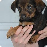 Adopt A Pet :: Patrick - Danbury, CT