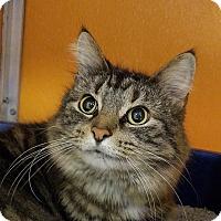 Adopt A Pet :: Cally - Elyria, OH
