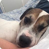 Adopt A Pet :: Jax - New Hartford, NY