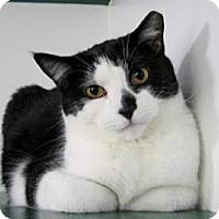 Adopt A Pet :: Larry - Belleville, MI