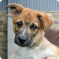 Adopt A Pet :: Aaron - white settlment, TX