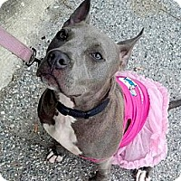 Adopt A Pet :: Bunny - Reisterstown, MD