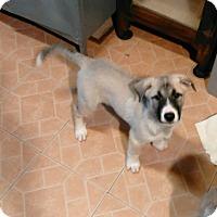Adopt A Pet :: Jake - Denver, IN