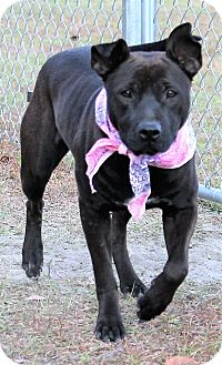 Labrador Retriever Mix Dog for adoption in Jesup, Georgia - Gretchen
