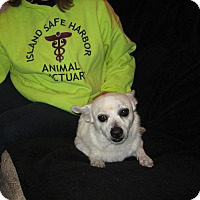 Adopt A Pet :: PACKMAN - Port Clinton, OH