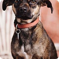 Adopt A Pet :: Jenna - Portland, OR