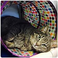 Adopt A Pet :: Marvin - Sanford, NC