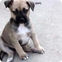 Adopt A Pet :: Keppi - Ashville, OH