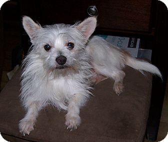 Terrier (Unknown Type, Small) Mix Dog for adoption in San Angelo, Texas - Eli