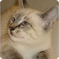 Adopt A Pet :: Sam - Davis, CA