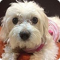 Adopt A Pet :: Annabelle - Denver, CO