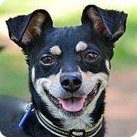 Adopt A Pet :: Charlie (super friendly) - Toluca Lake, CA