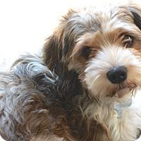 Adopt A Pet :: Falana - Norwalk, CT