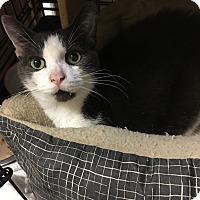 Adopt A Pet :: Trish - Simpsonville, SC