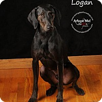 Adopt A Pet :: Logan - Topeka, KS