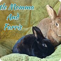 Adopt A Pet :: Farris Clark - Elizabethtown, KY