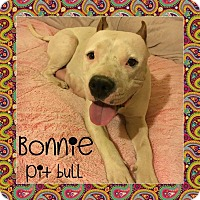 American Pit Bull Terrier Mix Dog for adoption in Winchester, California - Bonnie