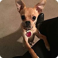 Adopt A Pet :: SIDNEY - Sherman, CT