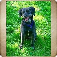 Adopt A Pet :: Stanley - Nanuet, NY