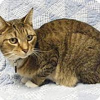 Adopt A Pet :: Mittens - Cleveland, OH