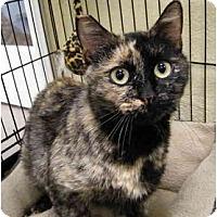 Adopt A Pet :: Athena - Modesto, CA