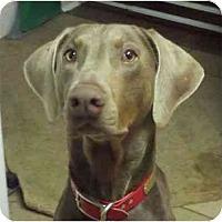 Adopt A Pet :: Memphis--adopted!! - New Richmond, OH