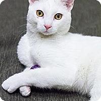 Adopt A Pet :: Devin - Chicago, IL