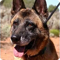 Adopt A Pet :: Guardian - Hamilton, MT