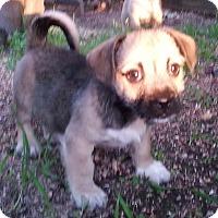 Adopt A Pet :: Jimmy - Burbank, CA