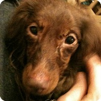 Adopt A Pet :: Bella - Jacobus, PA