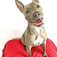 Adopt A Pet :: Ziggy - Toledo, OH