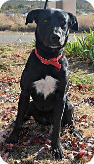 Labrador Retriever Mix Dog for adoption in Yreka, California - Rail