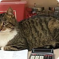 Adopt A Pet :: Stromie - Wayland, MI