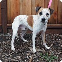 Adopt A Pet :: Elvis - Palo Alto, CA