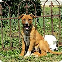 Adopt A Pet :: MURPHY - Bedminster, NJ
