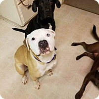 Adopt A Pet :: Gracie - grants pass, OR