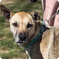 Adopt A Pet :: RIVER - Maumee, OH