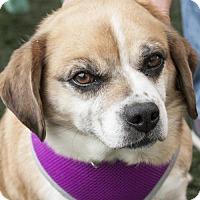 Adopt A Pet :: Bea - Burlingame, CA