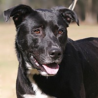 Adopt A Pet :: Elwood - North Fort Myers, FL